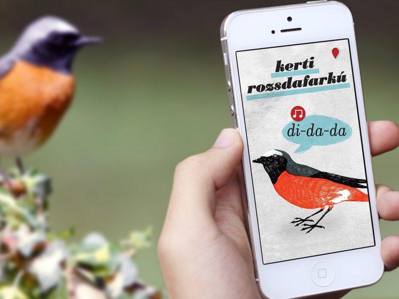 birding-app-estudio-nido-1